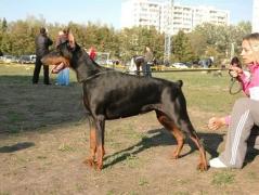 ambassador_dali_dekla_09